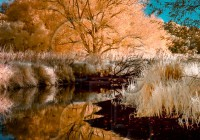 infrared_water_tree reflecting in river