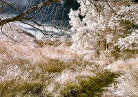 infrared_photography_landscape_riverbed