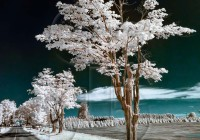 infrared photography_passages_tree by roadside