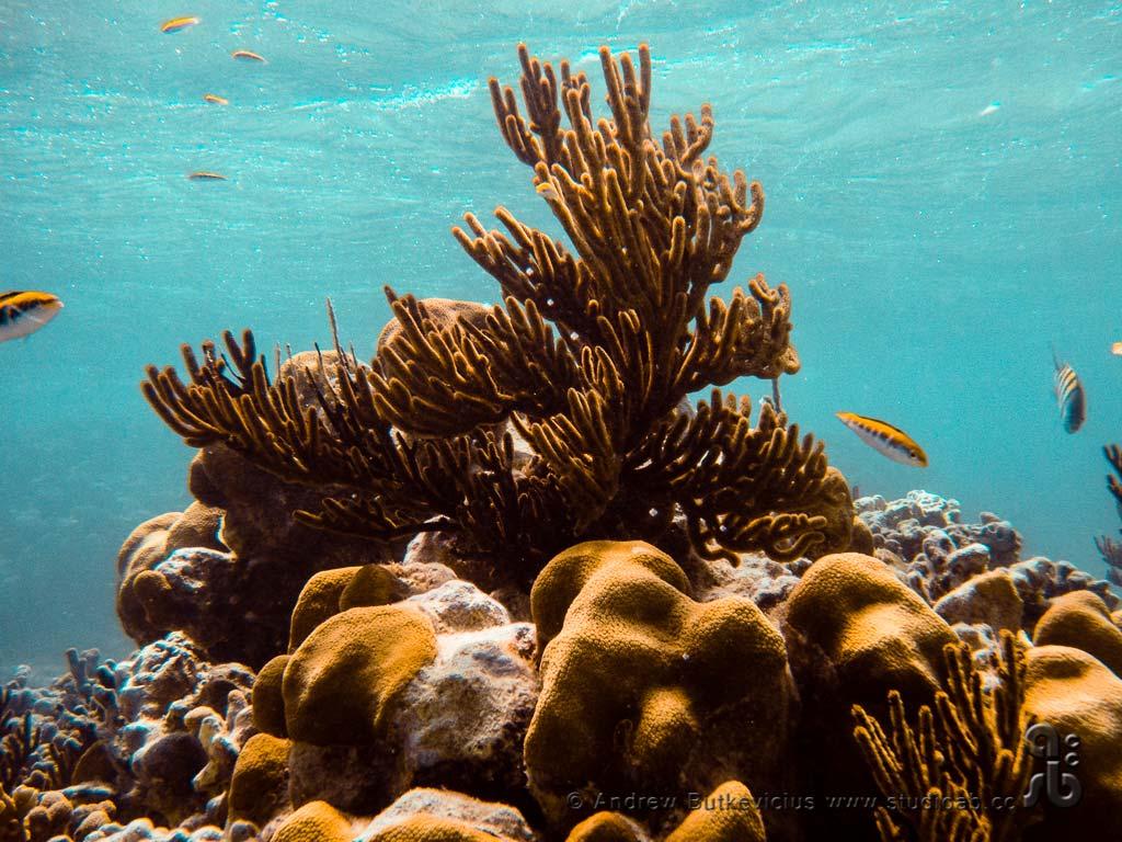 ab_Underwater-21