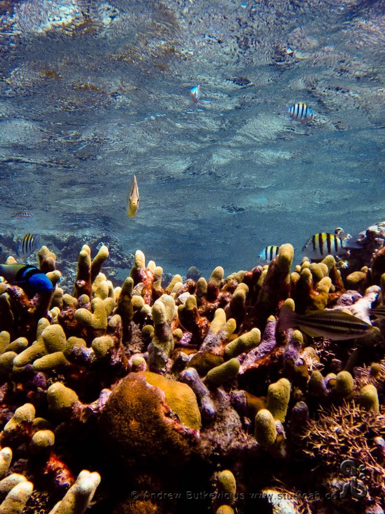ab_Underwater-22