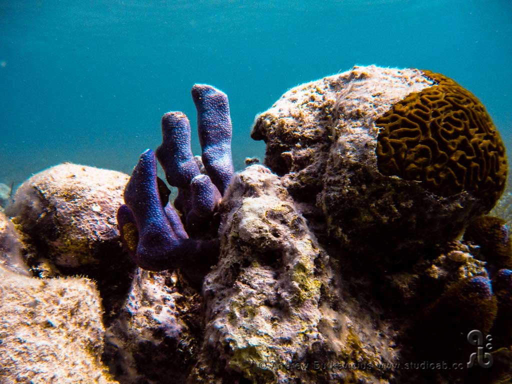 ab_Underwater-24