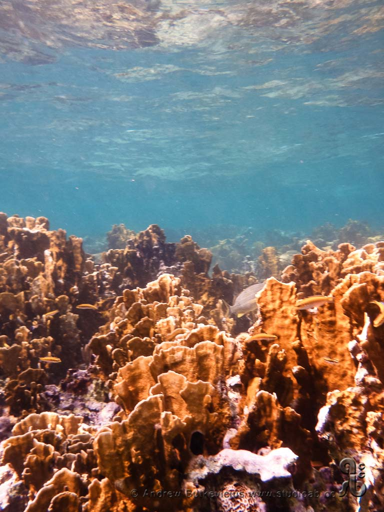 ab_Underwater-26