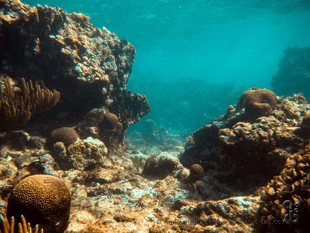 ab_Underwater-28
