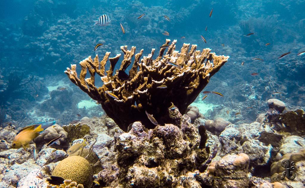 ab_Underwater-29