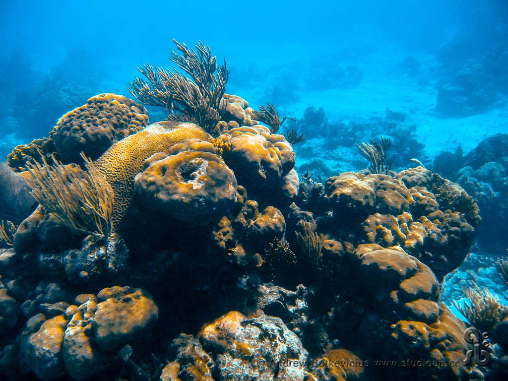 ab_Underwater-33