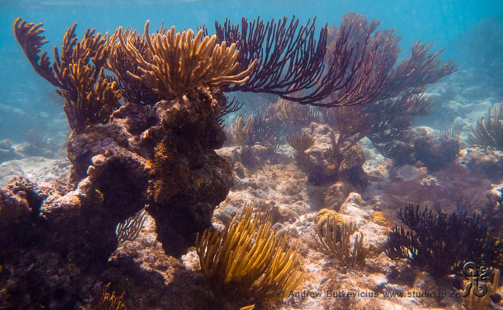 ab_Underwater-35