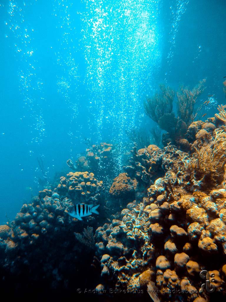 ab_Underwater-7