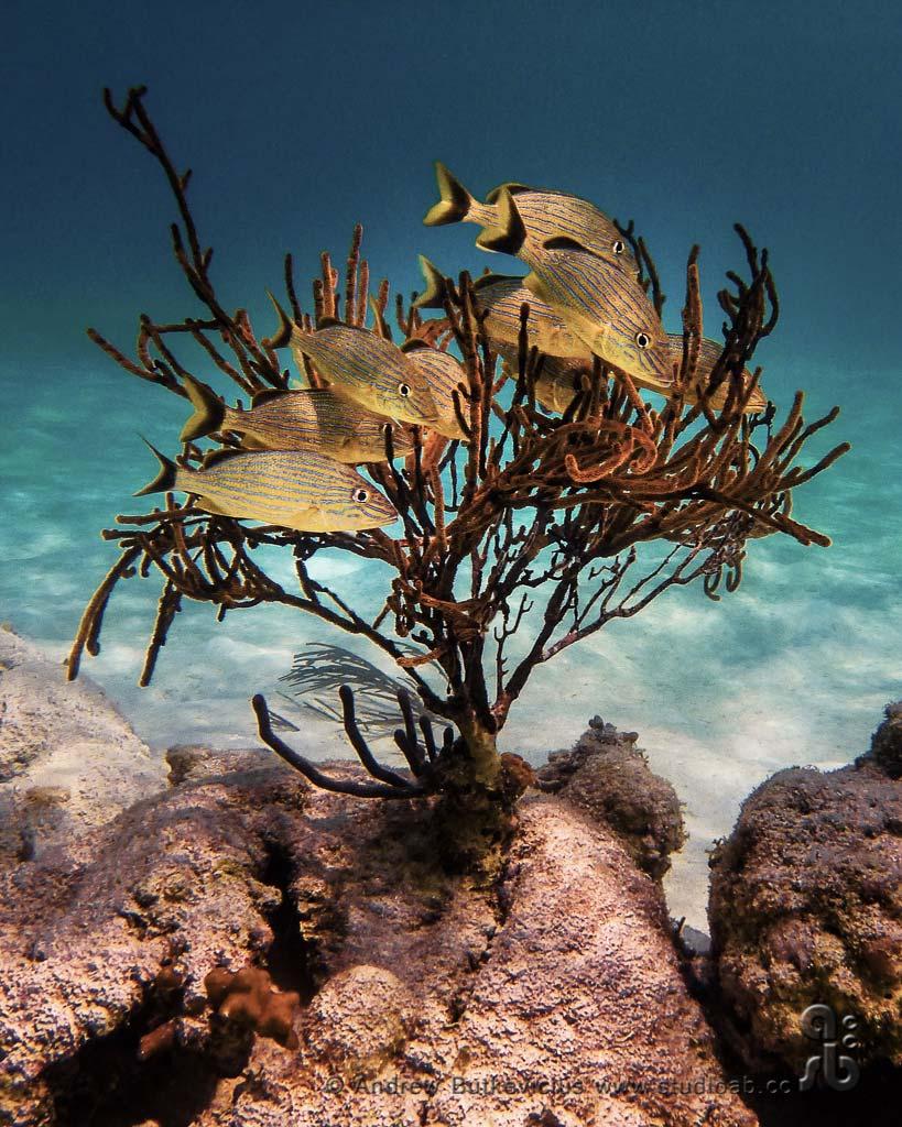 ab_Underwater