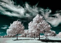 ir photography_clouds_wispy clouds surrounding trees
